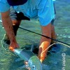 Hawaiian Bonefish Release